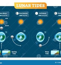 lunar and solar tides vector illustration diagram poster spring and neap tide  [ 1300 x 967 Pixel ]