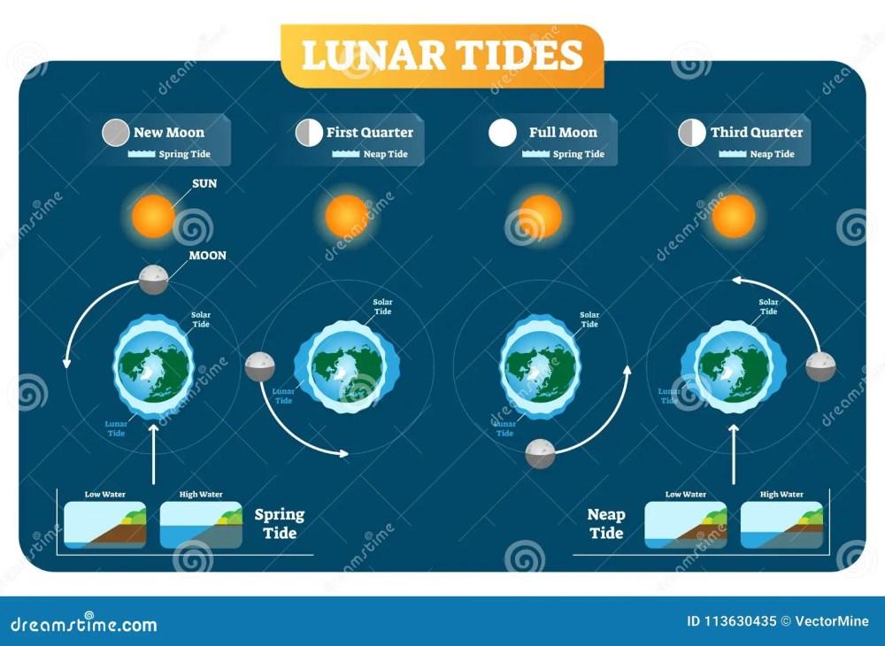 medium resolution of lunar and solar tides vector illustration diagram poster spring and neap tide