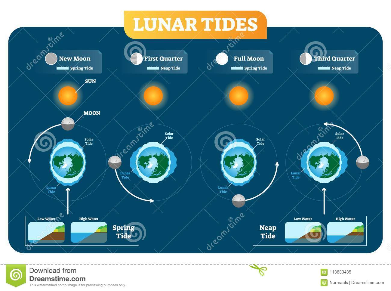 hight resolution of lunar and solar tides vector illustration diagram poster spring and neap tide