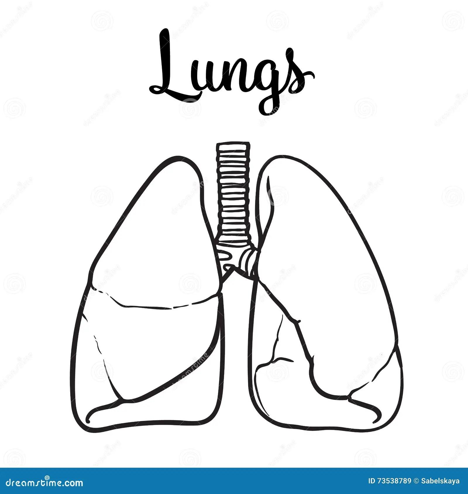 Lungen Eines Gesunden Person Chitsye Vektor Abbildung