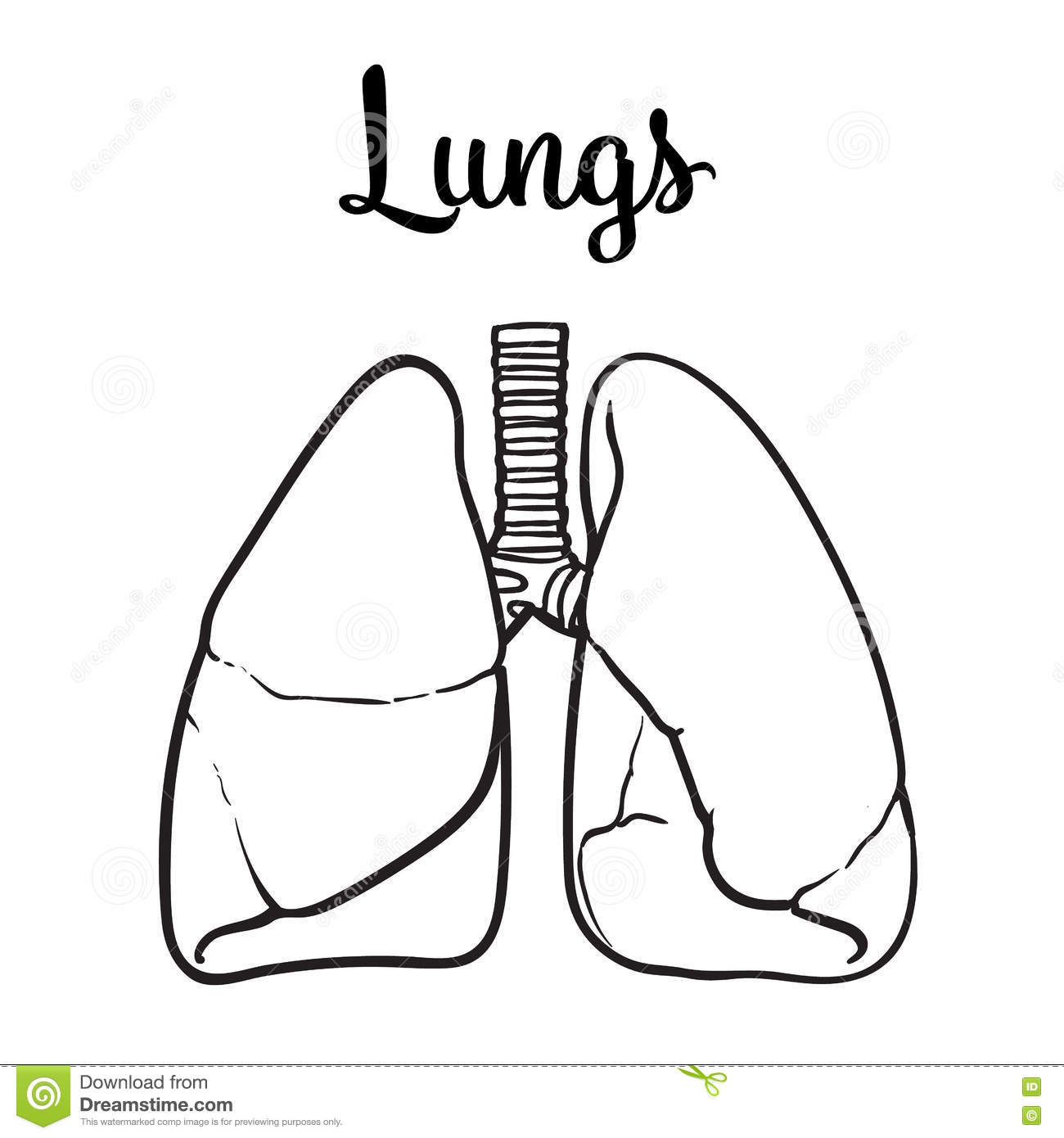 lungs sketch Gallery