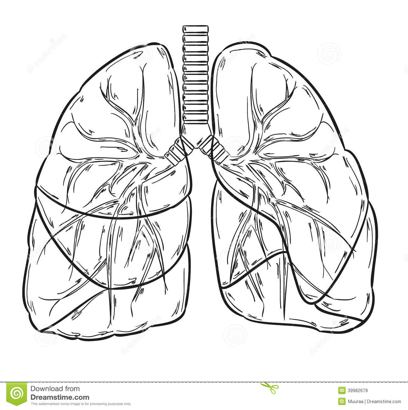 Lungs Sketch Stock Vector Illustration Of Free Inhale