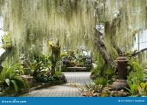 Lush Green Fern Garden Stock - 27176570