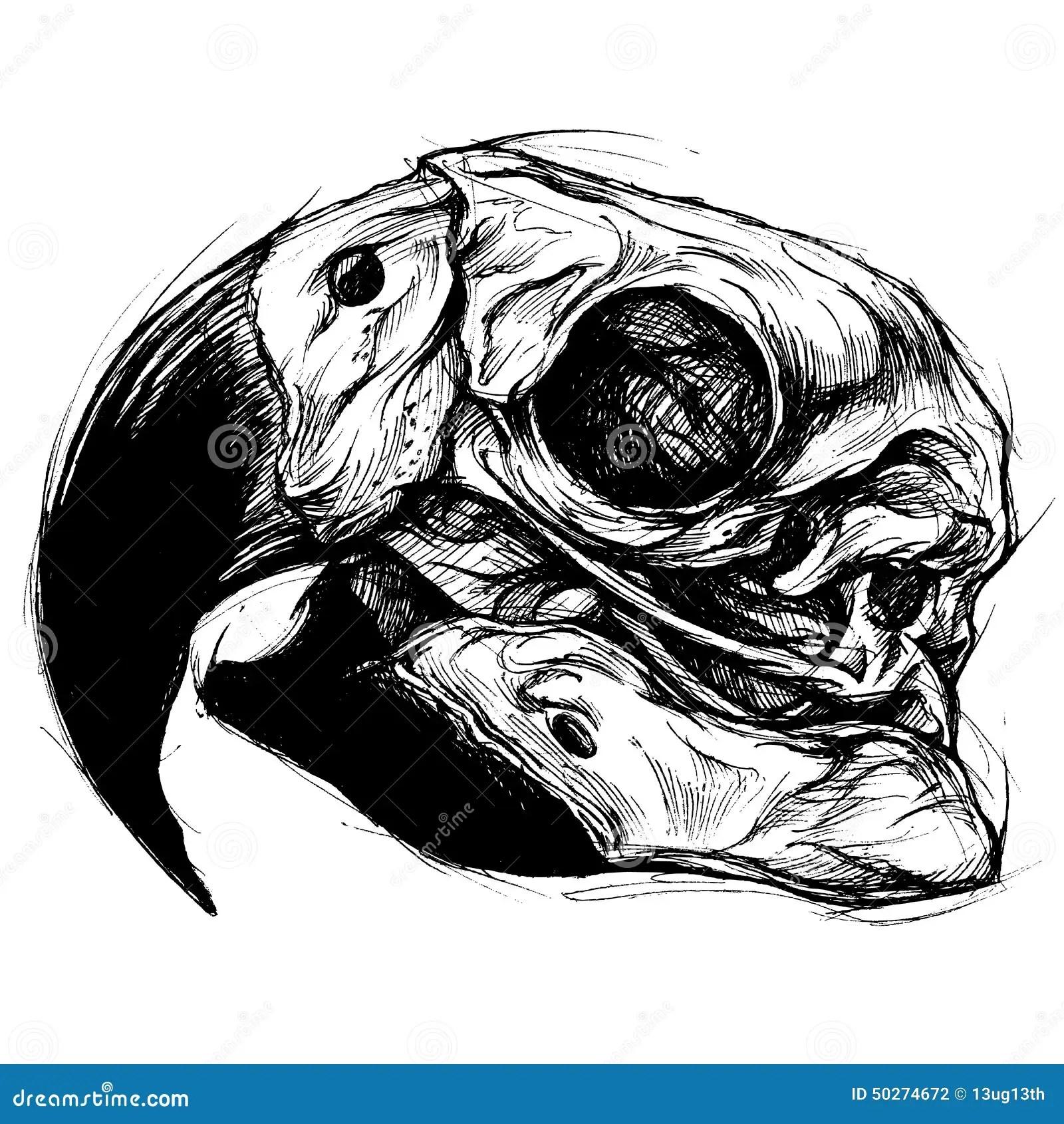 Macaw Skull Drawing Line Work Vector Stock Vector