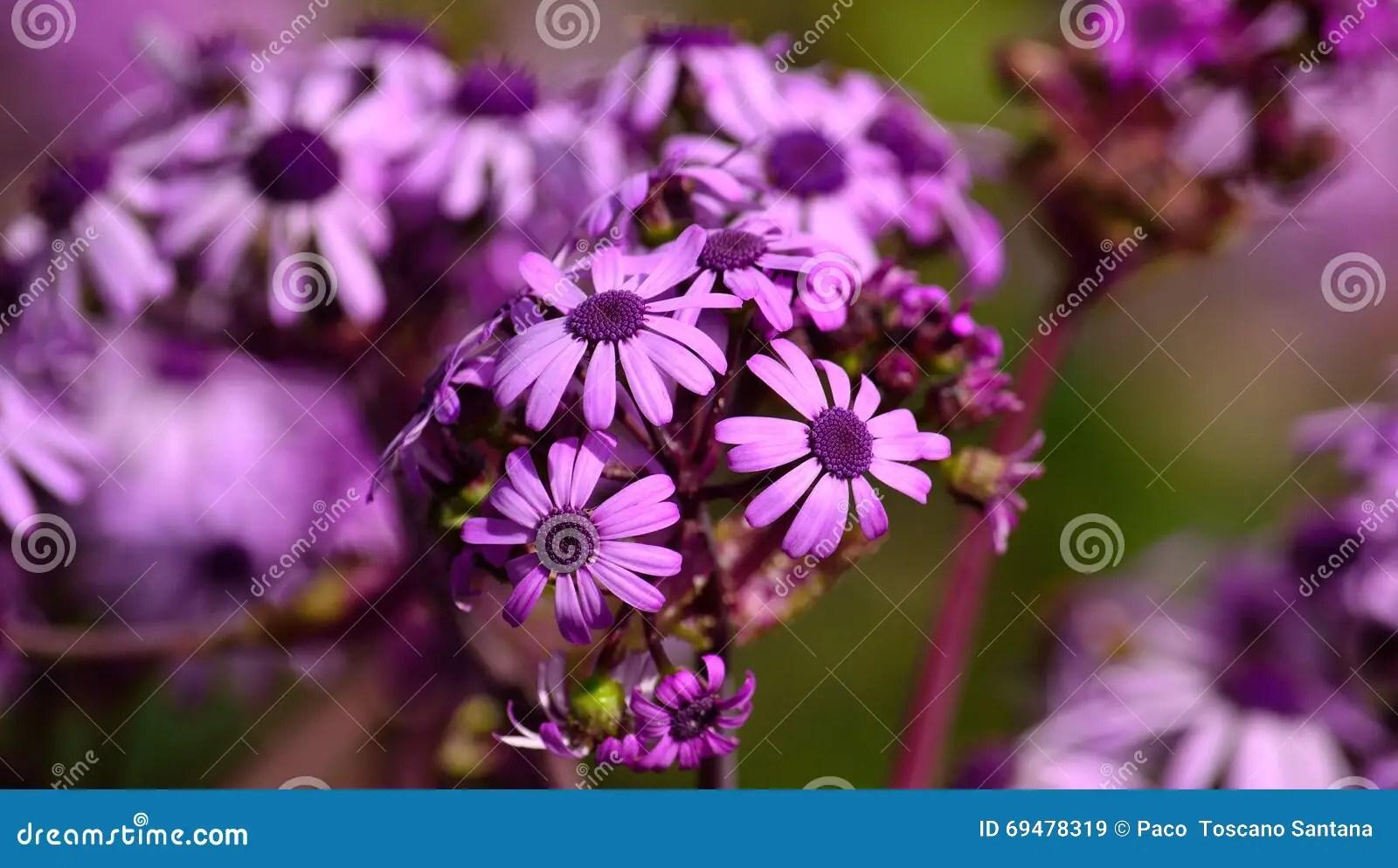 Welche Blumen Im Juli Pflanzen welche blumen kann man