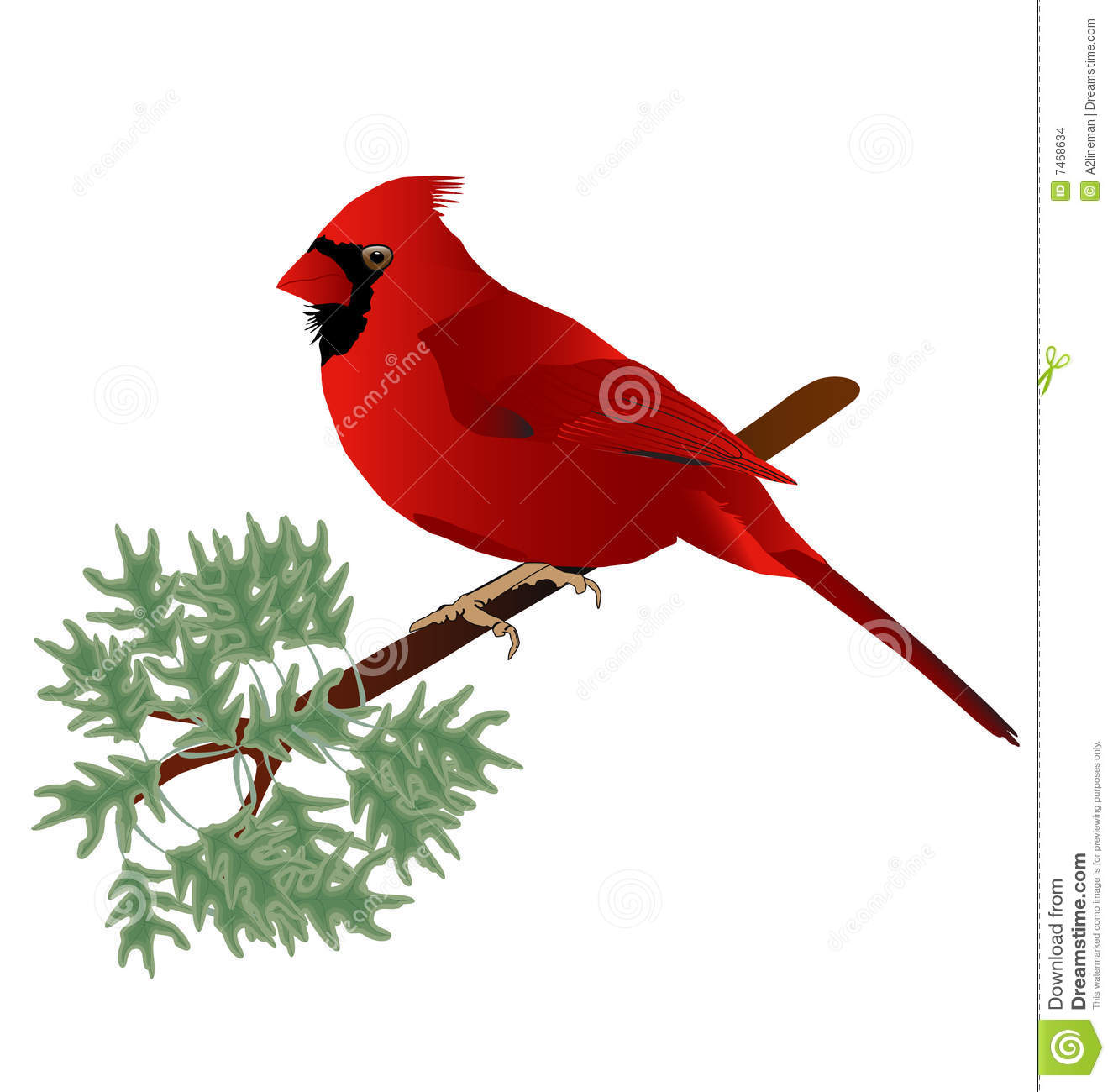 Male Cardinal Stock Images Image 7468634