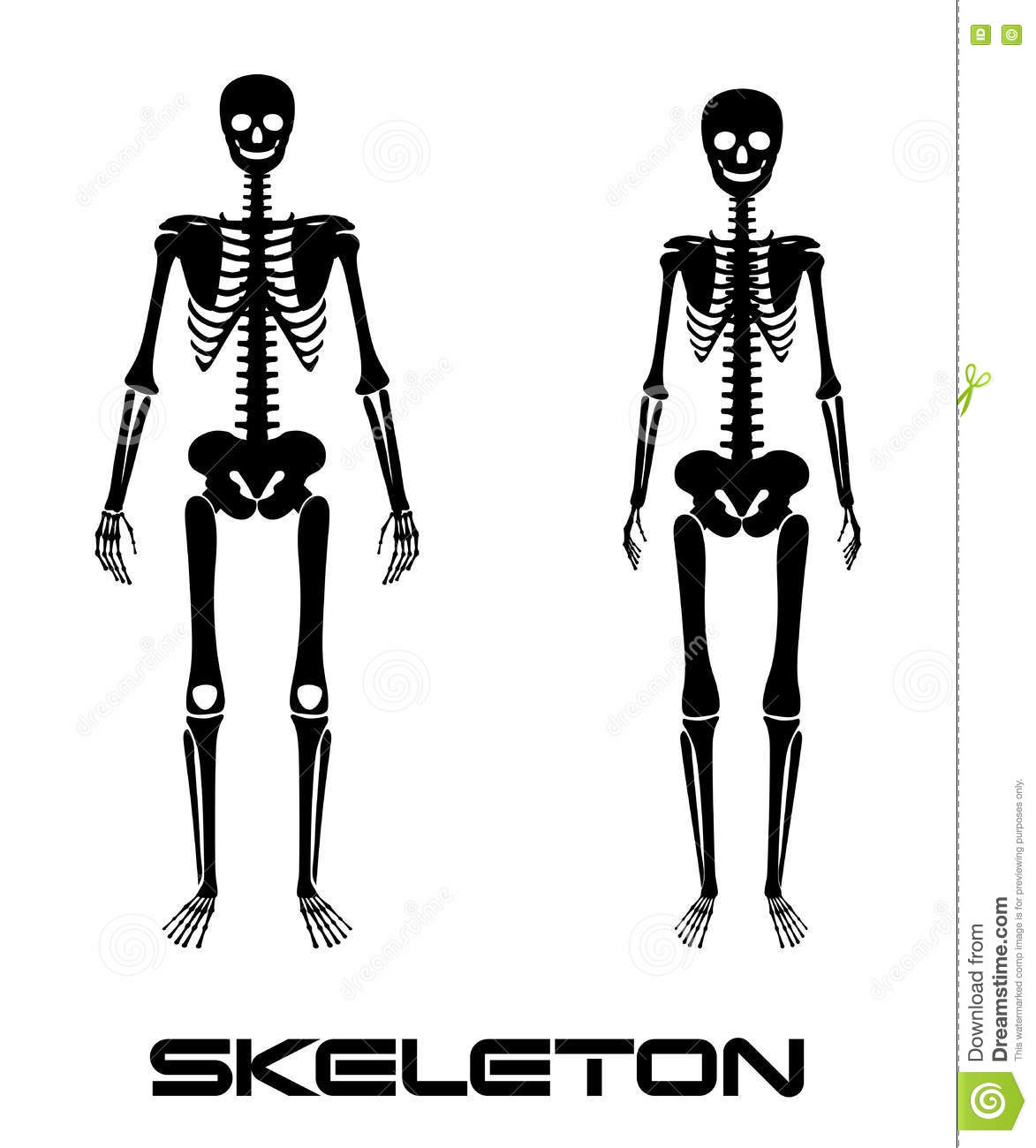 Male And Female Skeleton