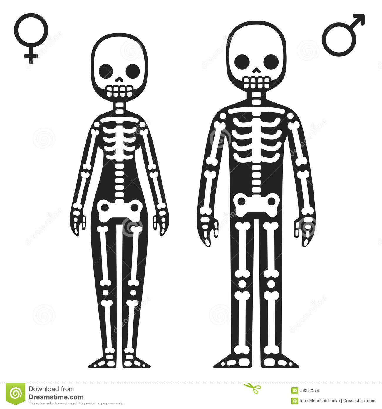 Male And Female Skeletons Stock Vector