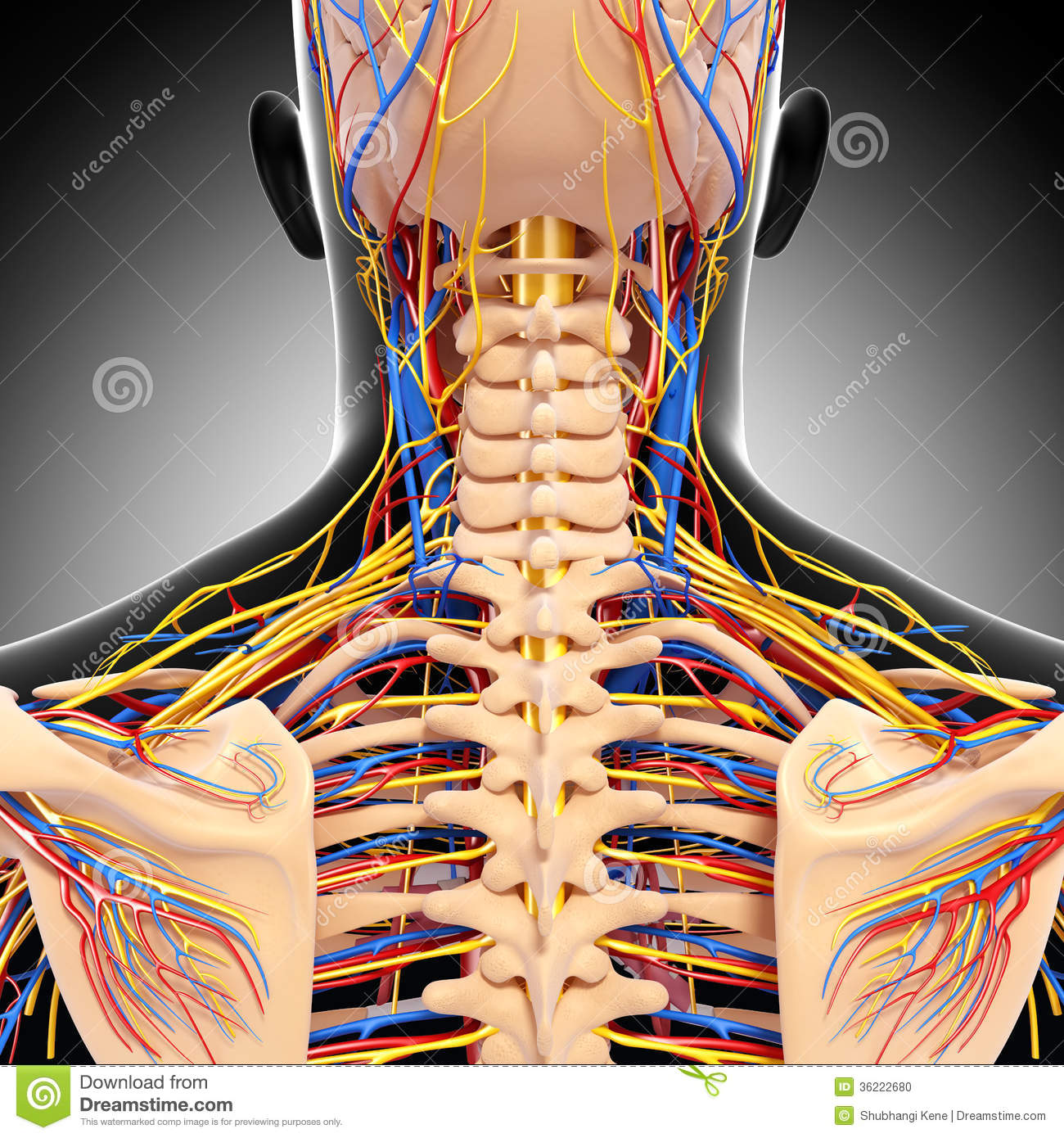 hight resolution of 3d art illustration of male head back view circulatory system in gray