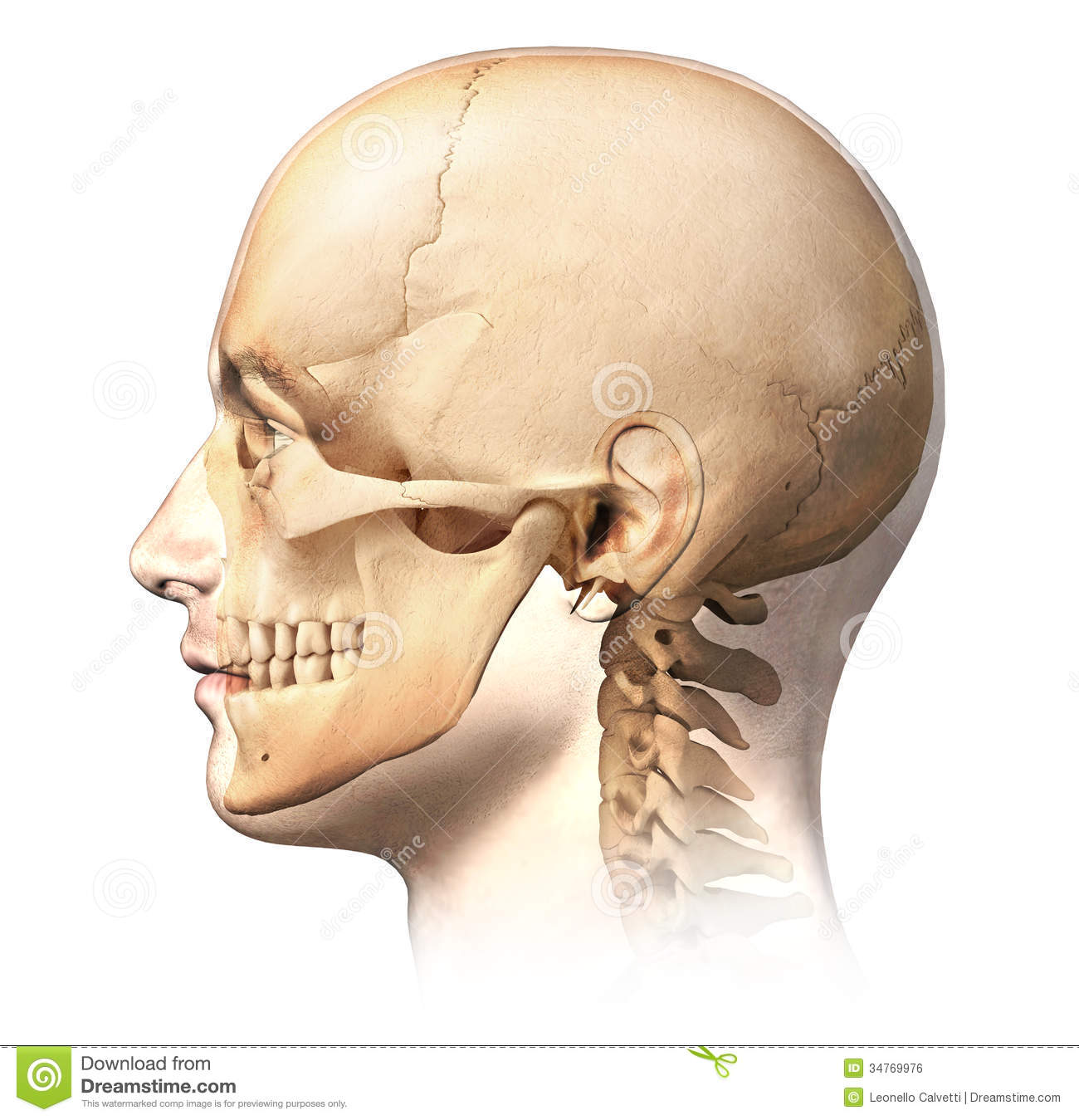 Male Human Head With Skull In Ghost Effect Side View