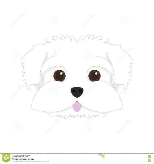 small resolution of maltese dog vector illustration maltese dog on white background vector illustration royalty free illustration