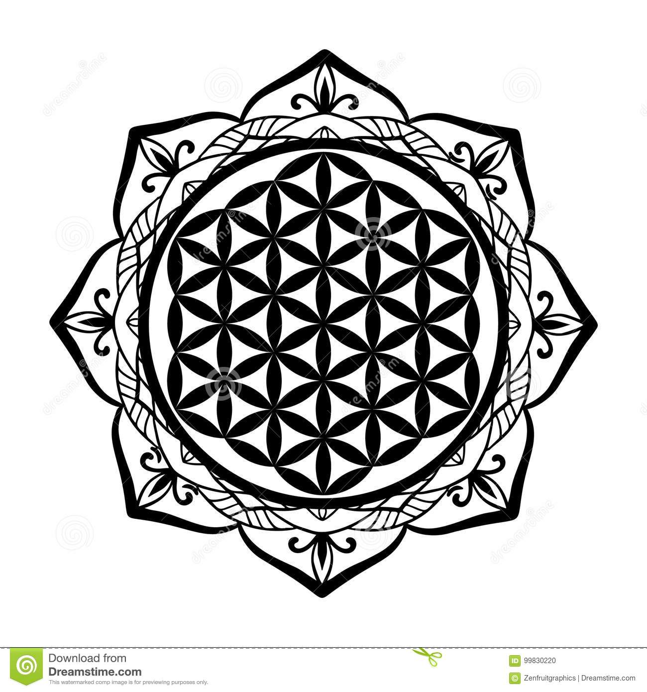 mandala frame and flower