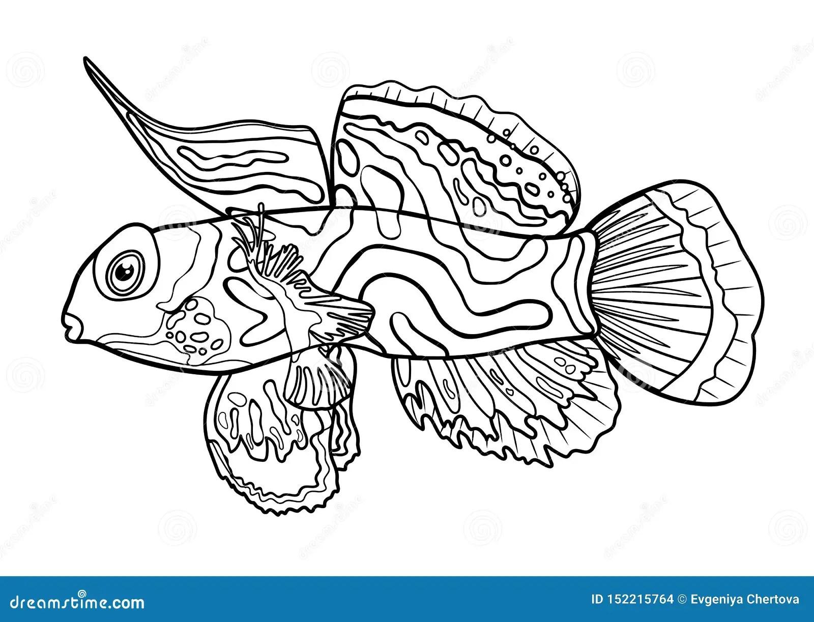 Mandarin Fish Line Silhouette Cartoon Hand Drawn Sea