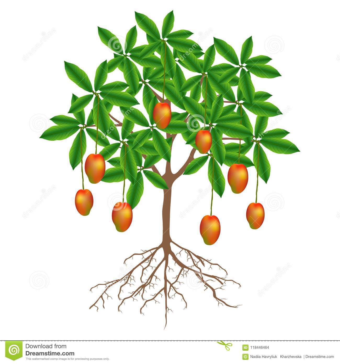 A Mango Tree With Fruits On A White Background Stock