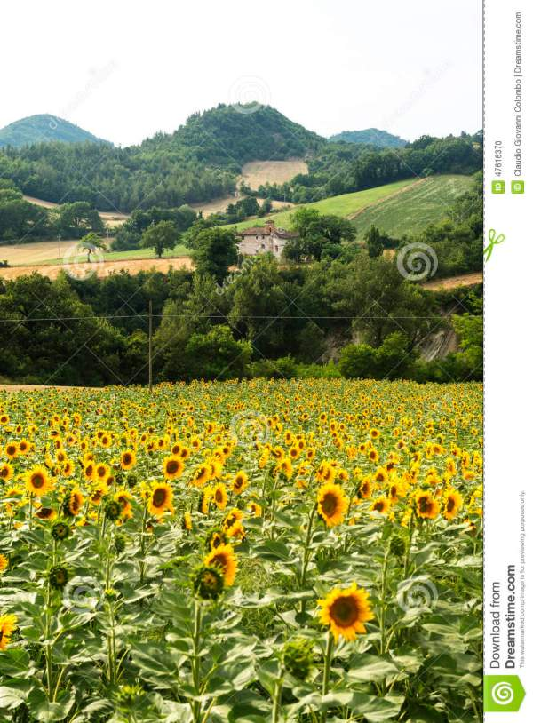 Marches Country Landscape Stock Of Europe - 47616370