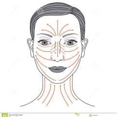 Facial Lymph Nodes Diagram Ford Ranger Wiring 1999 Massage Lines Stock Vector Image Of Luxury Illustration