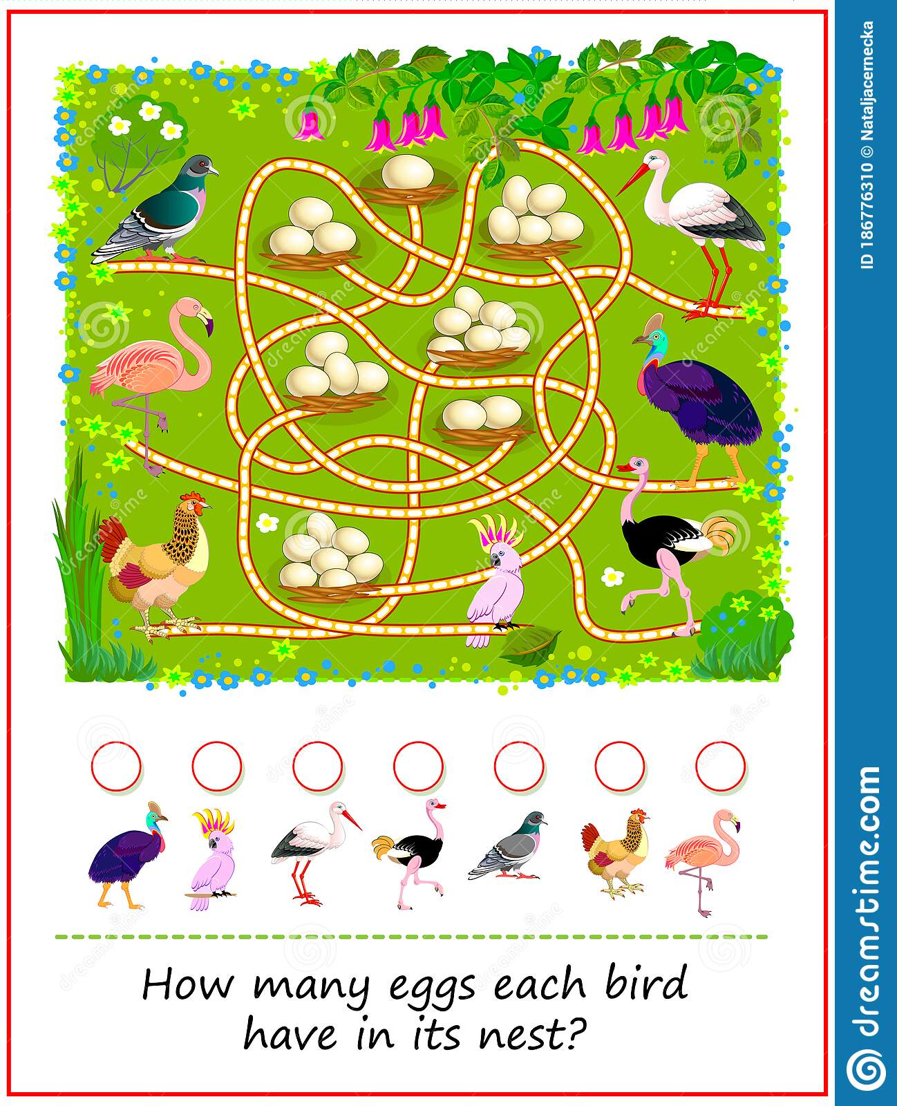 Math Education For Children How Many Eggs Each Bird Have