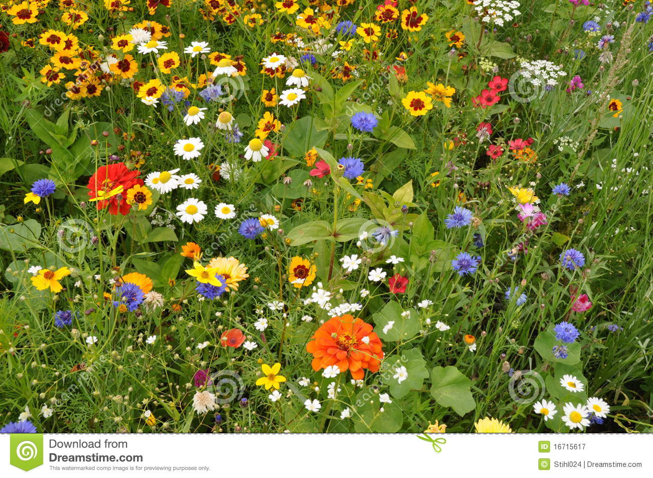 Fall Wallpaper Drawing Meadow With Summer Flowers Royalty Free Stock Photography