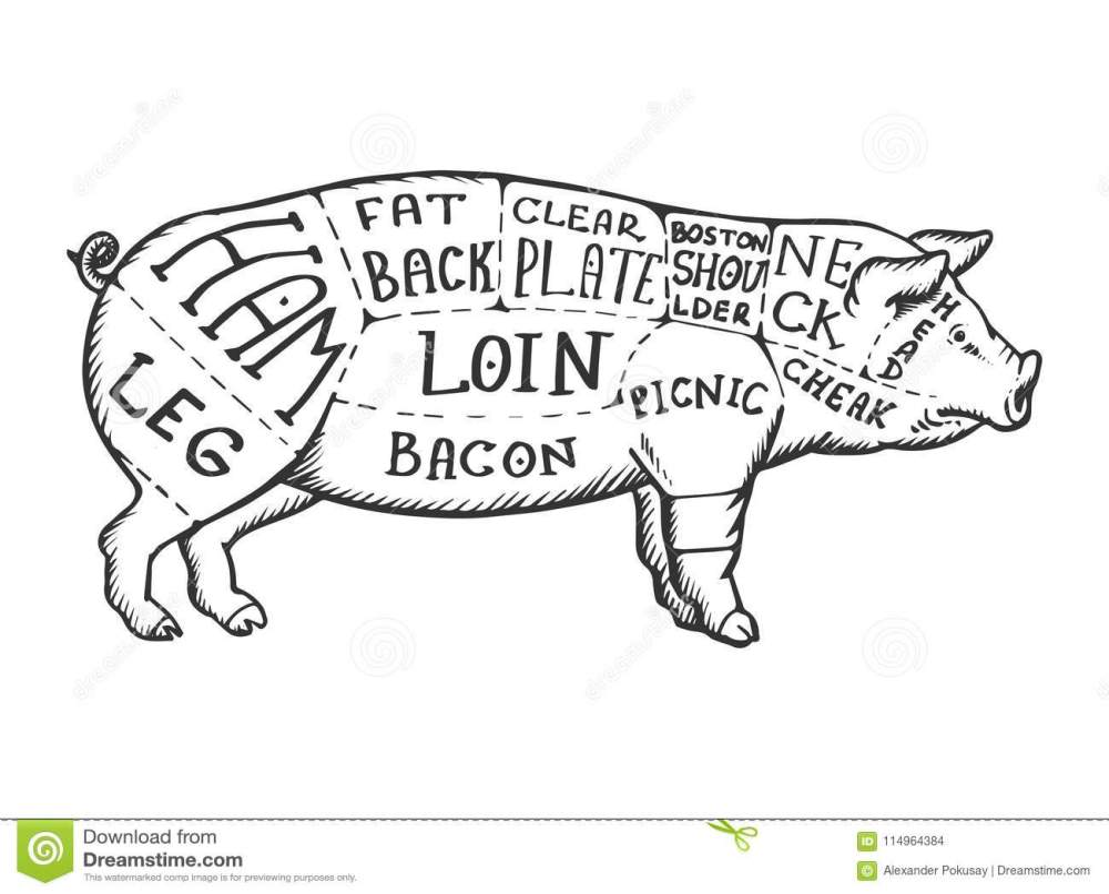 medium resolution of beef pig diagram wiring diagram yer beef pig diagram wiring diagram advance beef pig diagram
