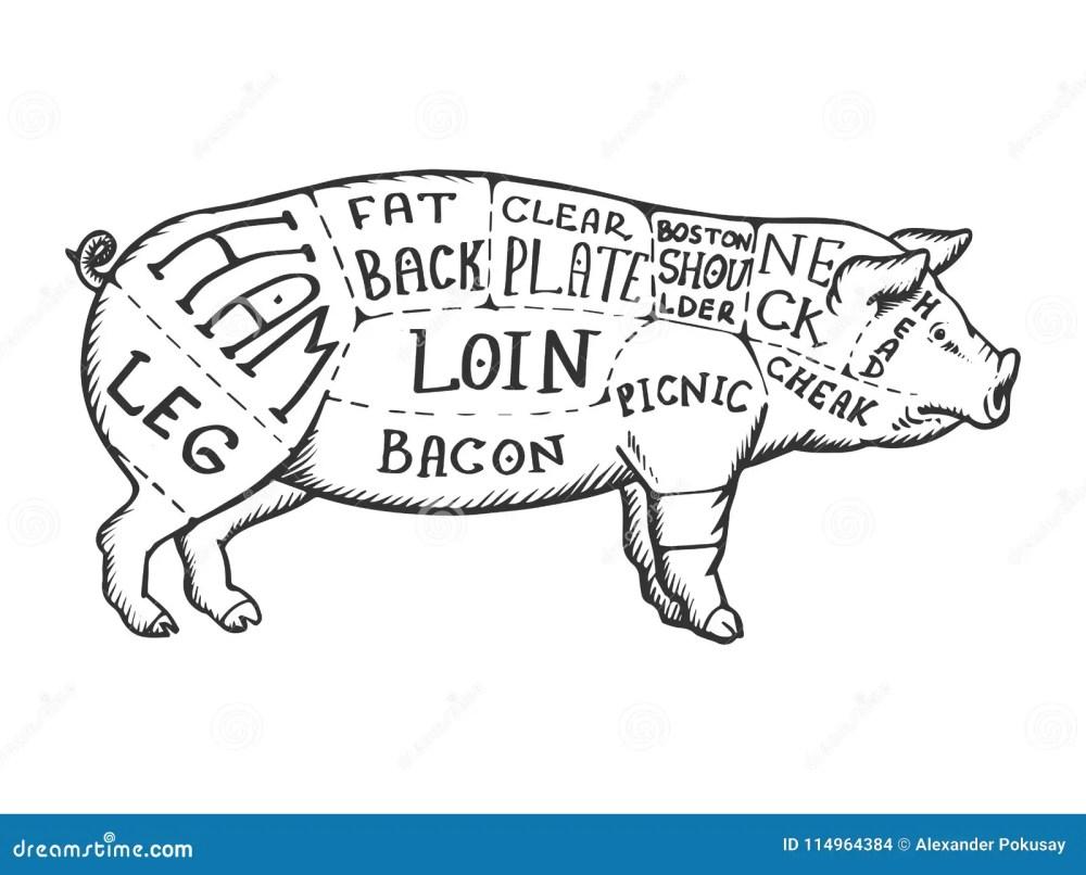 medium resolution of meat diagram pig engraving vector