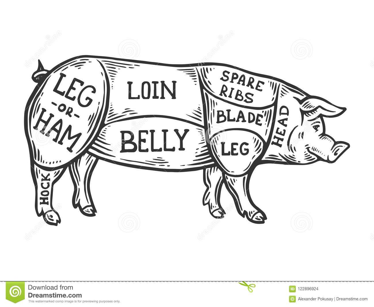hight resolution of meat diagram pig engraving vector