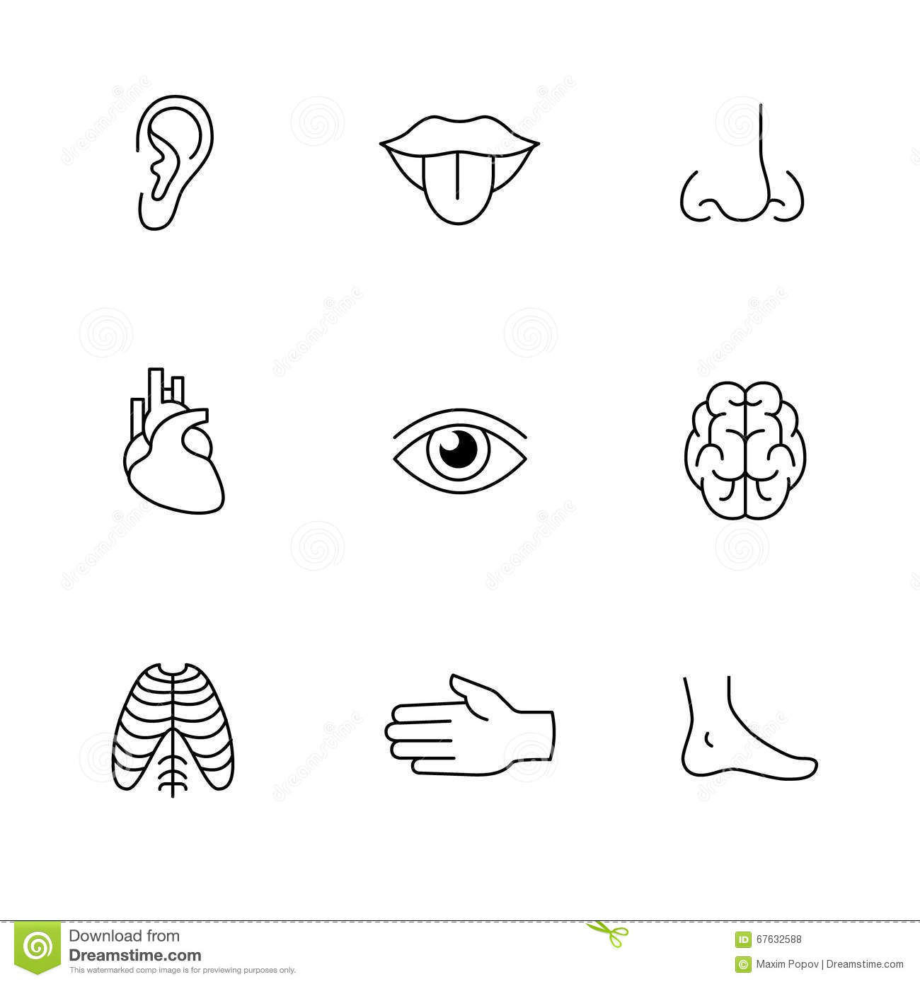 Organs Set Icons Vector Illustration