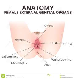 medical poster female anatomy vagina [ 1300 x 1390 Pixel ]