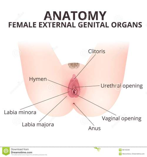 small resolution of medical poster female anatomy vagina