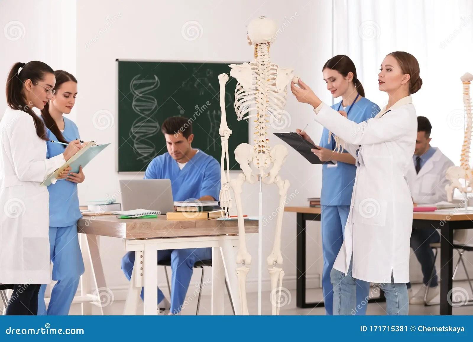 Medical Students Studying Human Skeleton Anatomy Stock