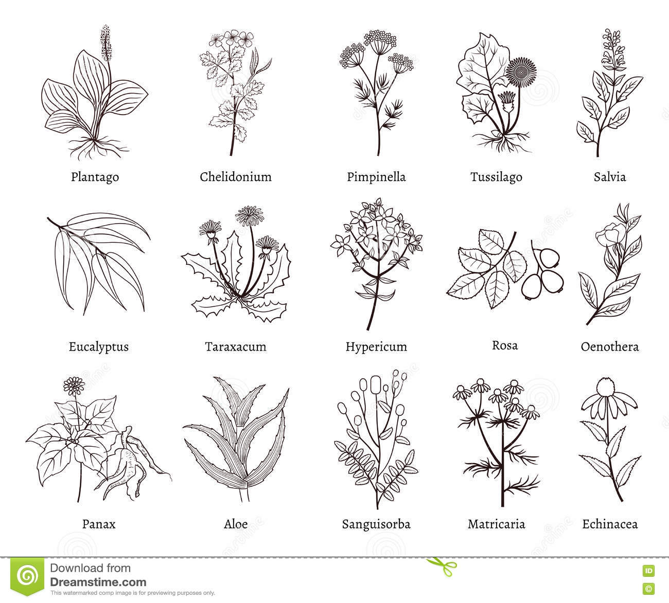 Aromatic Herbs And Plants Background Design Vector