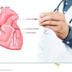 Anatomical Heart Diagram Les Paul Wiring Push Pull Medicine Doctor Vector Stock Photo Image Of