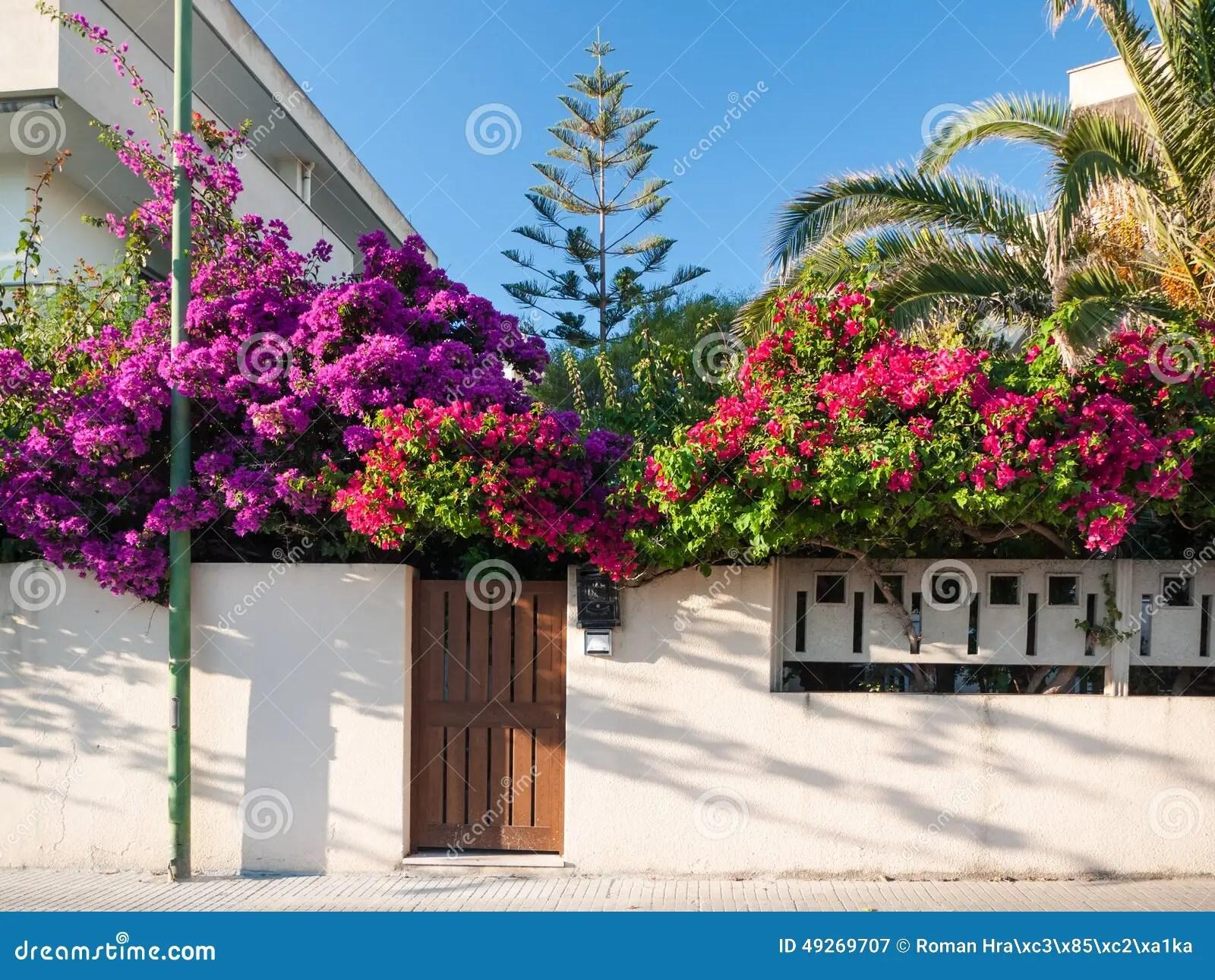 Mediterranean Flower Garden Stock Image Image 49269707