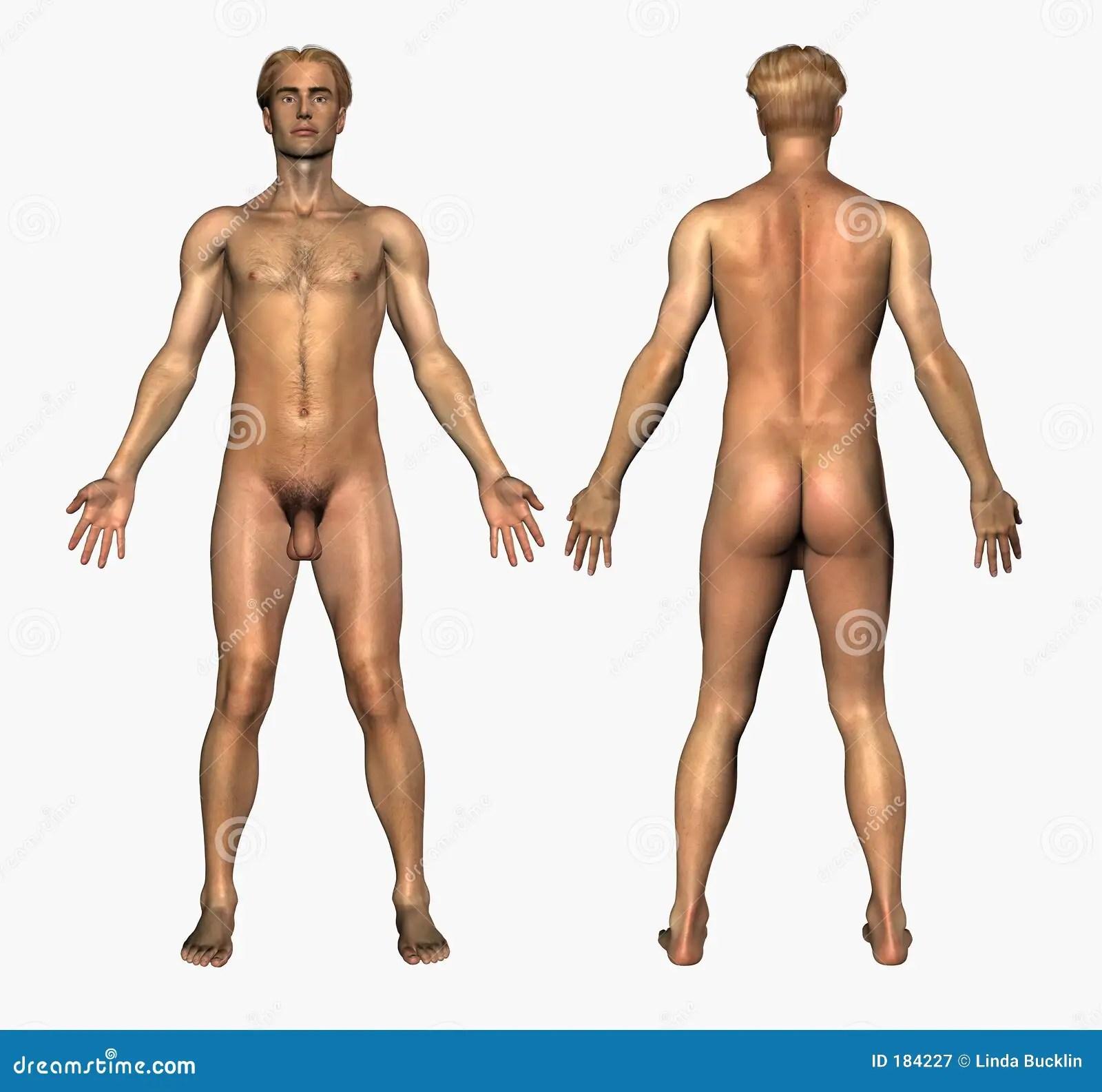 Menselijke Anatomie  Naakt Mannetje  Voorzijde En Rug
