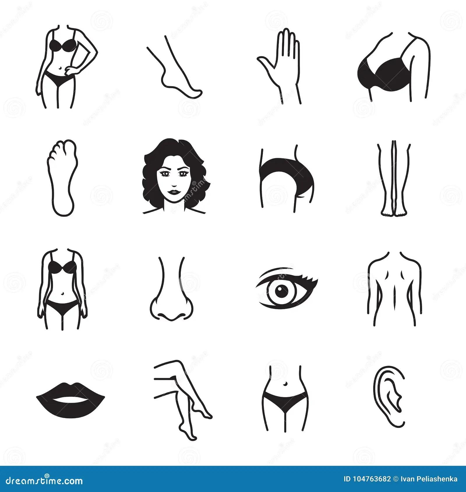 Menselijke Lichaamsdelenpictogrammen Vector Illustratie
