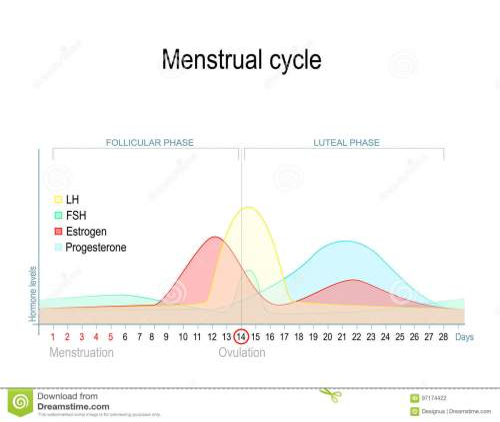 small resolution of menstrual stock illustrations 2 397 menstrual stock illustrations vectors clipart dreamstime