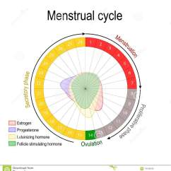 Menstrual Cycle Diagram With Ovulation Data Flow Symbols Meaning And Hormone Level Stock Vector