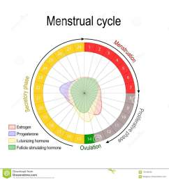 ovarian cycle follicular and luteal phase bleeding period and ovulation circular flow chart vector diagram [ 1300 x 1390 Pixel ]