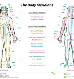 meridian system chart female body with principal and centerline acupuncture meridians anterior and posterior view traditional chinese medicine  [ 1300 x 1017 Pixel ]