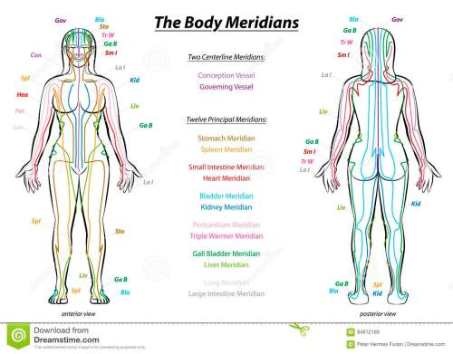 small resolution of meridian system chart female body with principal and centerline acupuncture meridians anterior and posterior view traditional chinese medicine