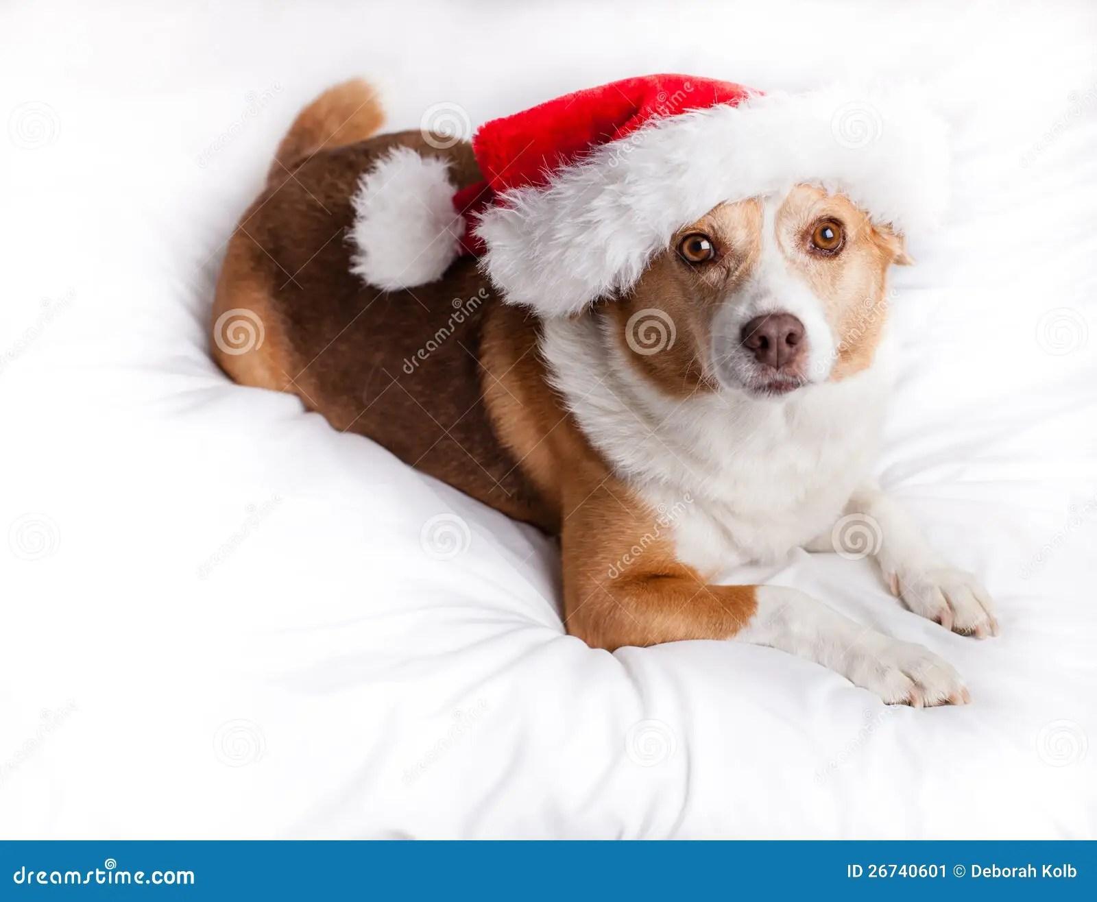 Merry Christmas Dog Stock Image Image 26740601