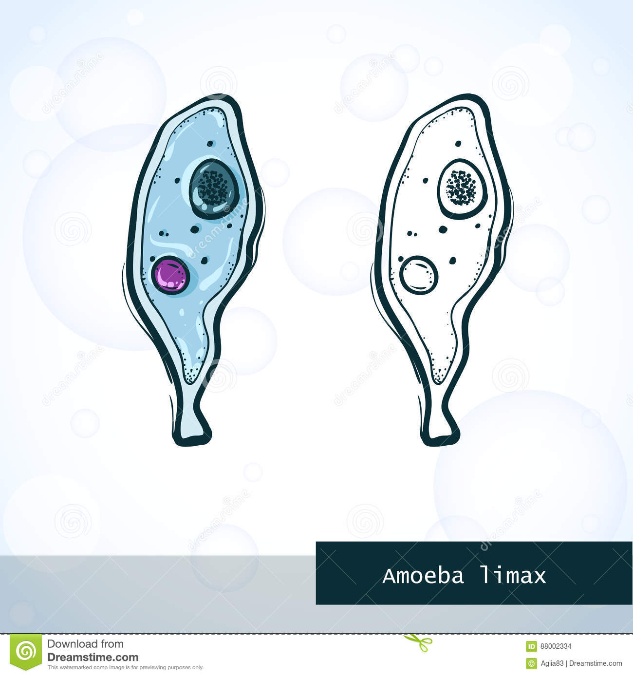 amoeba cell diagram pioneer head unit wiring structure of an proteus cartoon vector