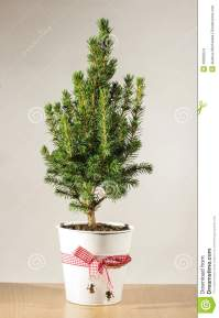 Miniature Potted Christmas Tree On The Table Stock Photo ...