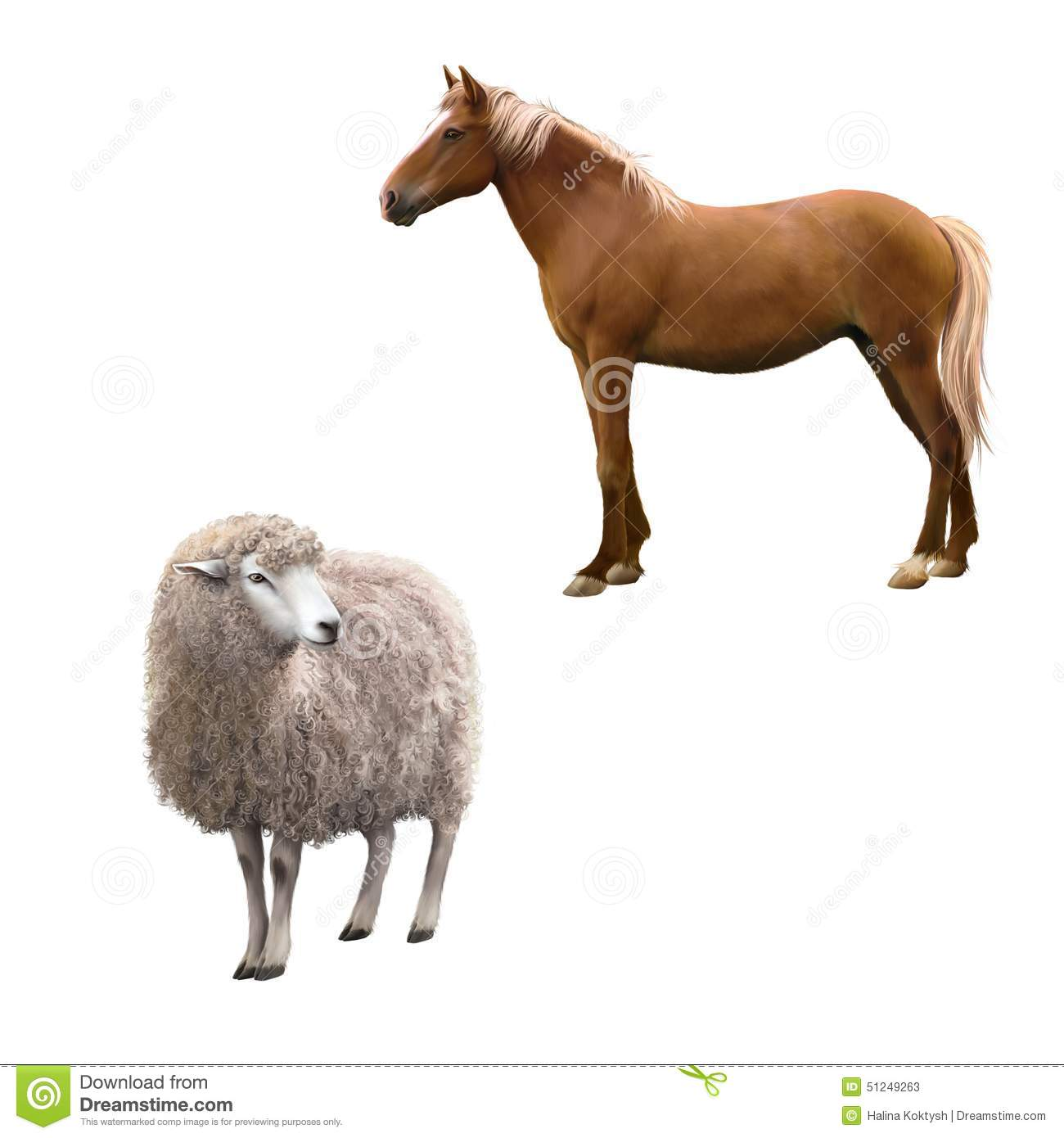 Mixed Breed Horse Standing Front View Of A Sheep Stock