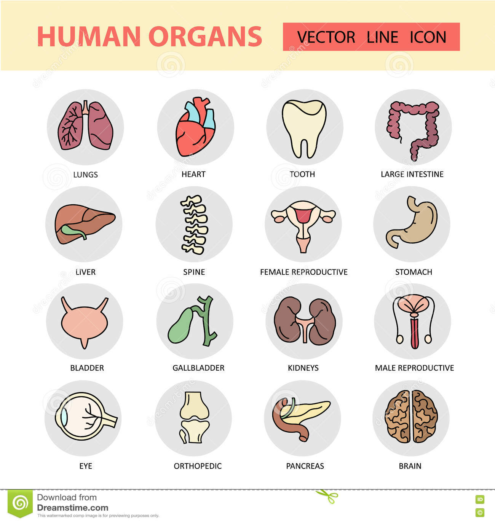 Modern Color Thin Line Icons On A Theme Medicine Human
