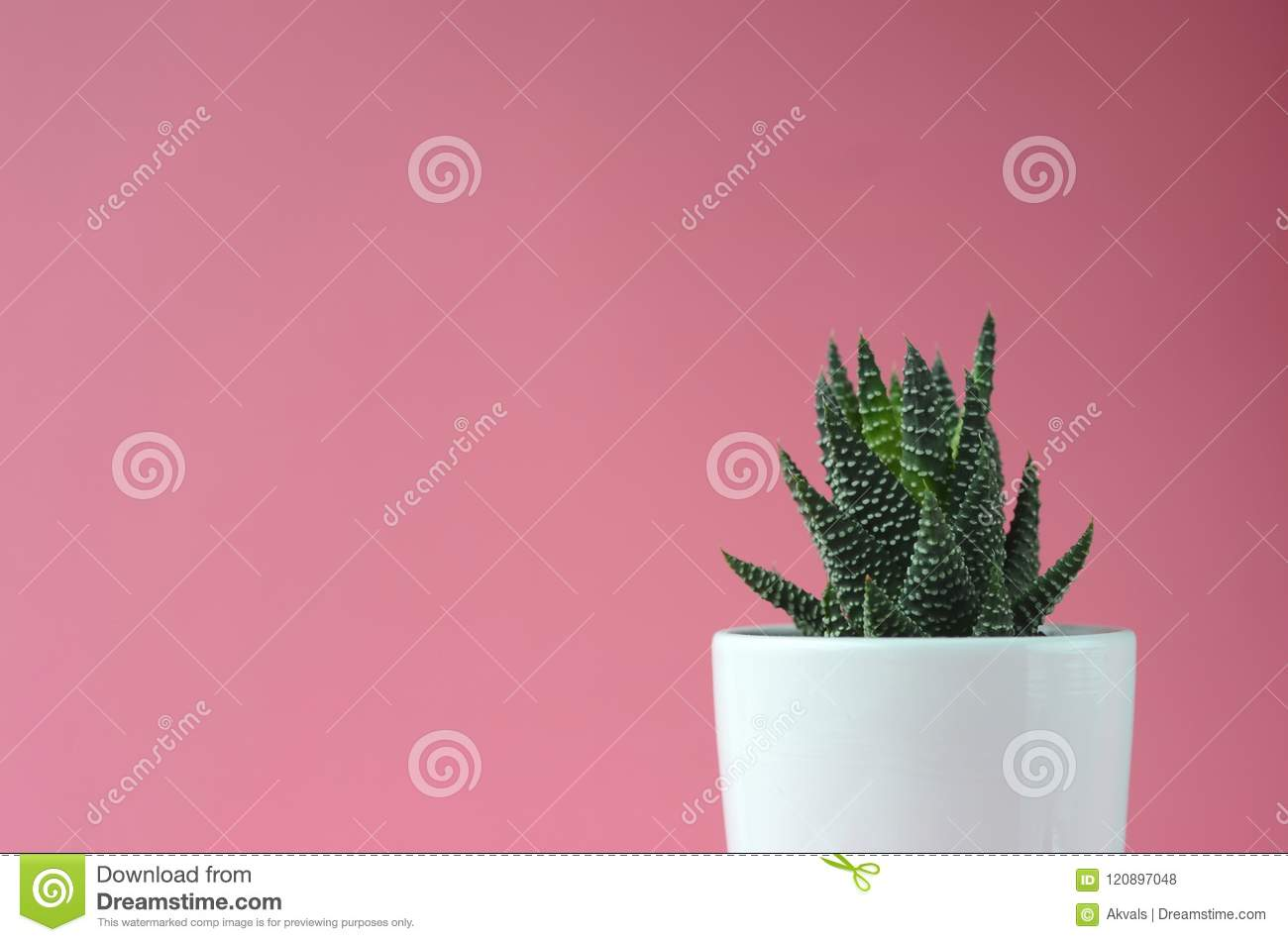 Modern Minimalist Home Decor Succulents On A Solid Color Copy Space Stock Photo Image Of Bold Gardening 120897048
