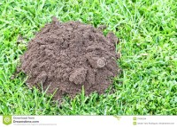 Mole Hill stock photo. Image of garden, pest, molehill ...