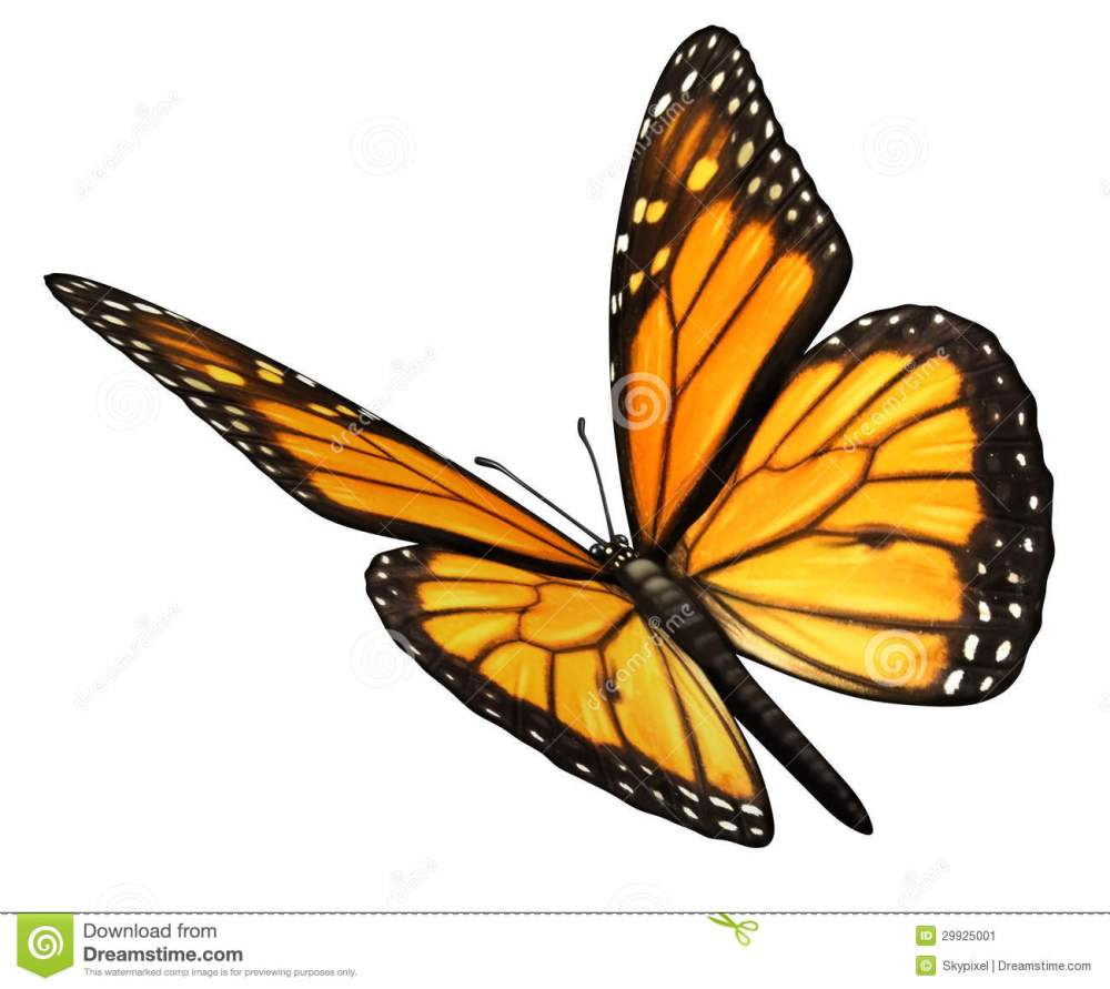 medium resolution of monarch butterfly angled stock illustration illustration
