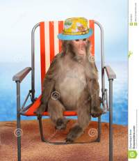Monkey Relaxing On A A Beach Chair Stock Image - Image ...