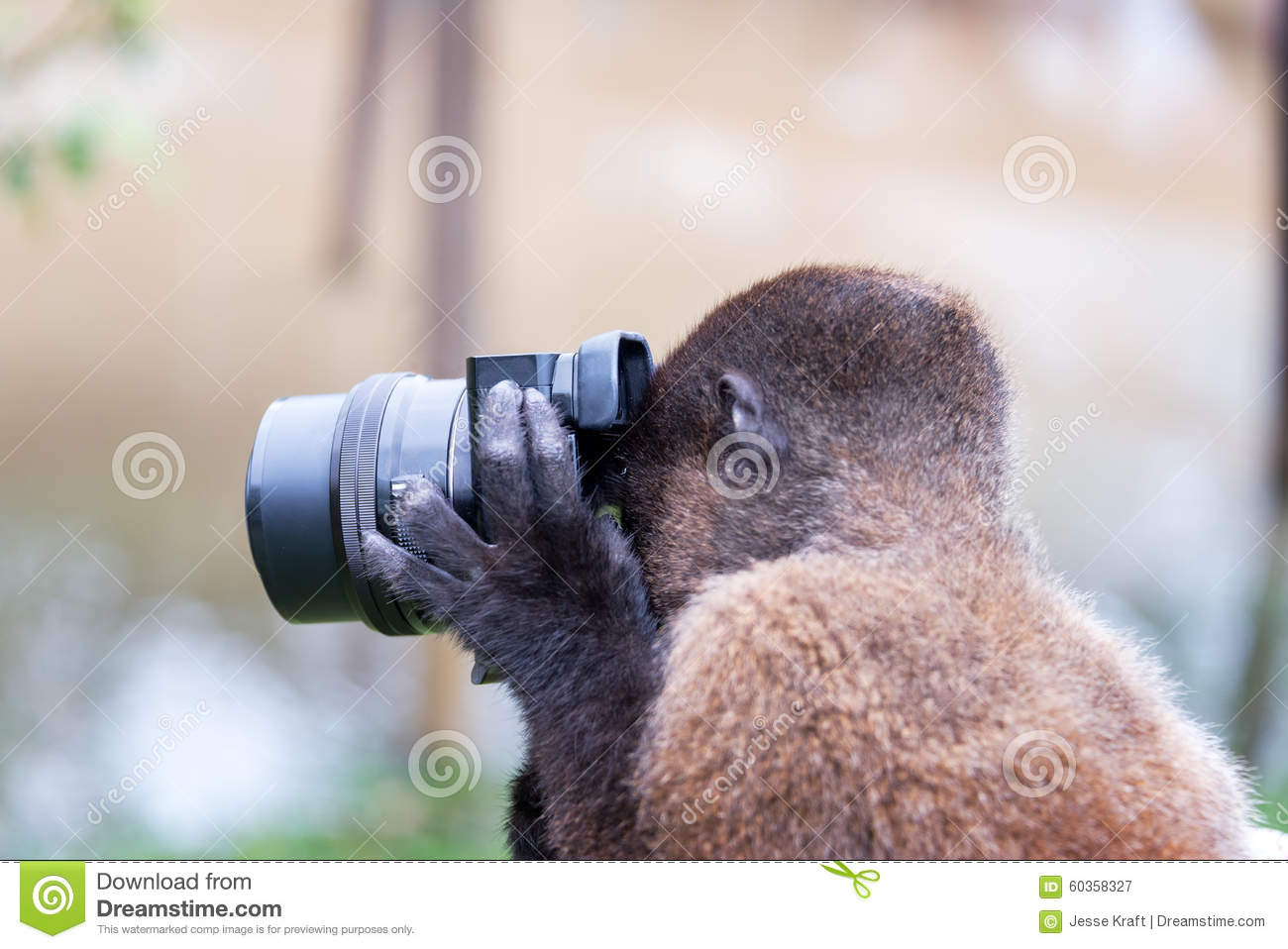 Monkey Taking A Picture Stock Photo Image 60358327