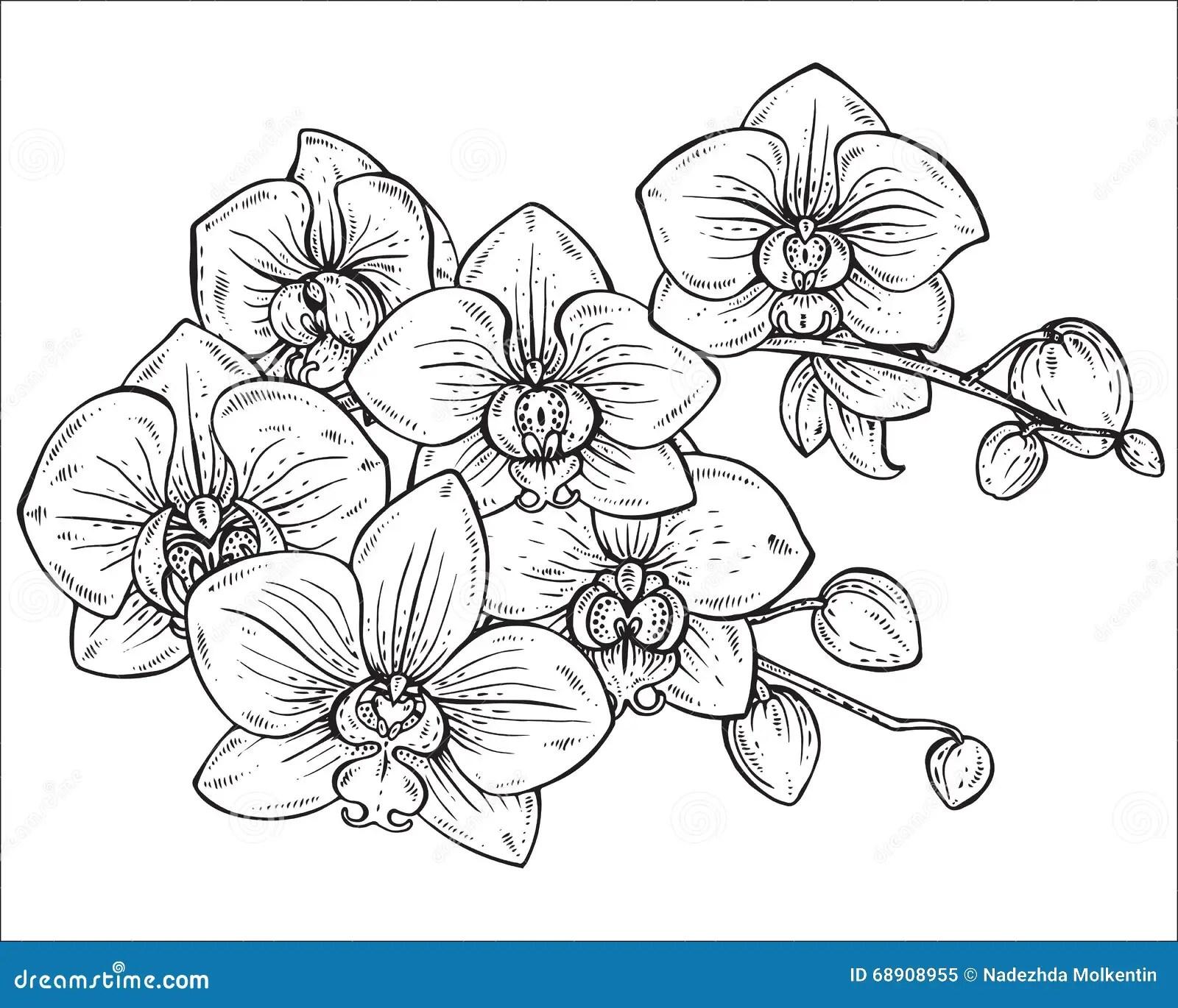 Mooi Zwart-wit Vector Bloemenboeket Van Orchideebloemen